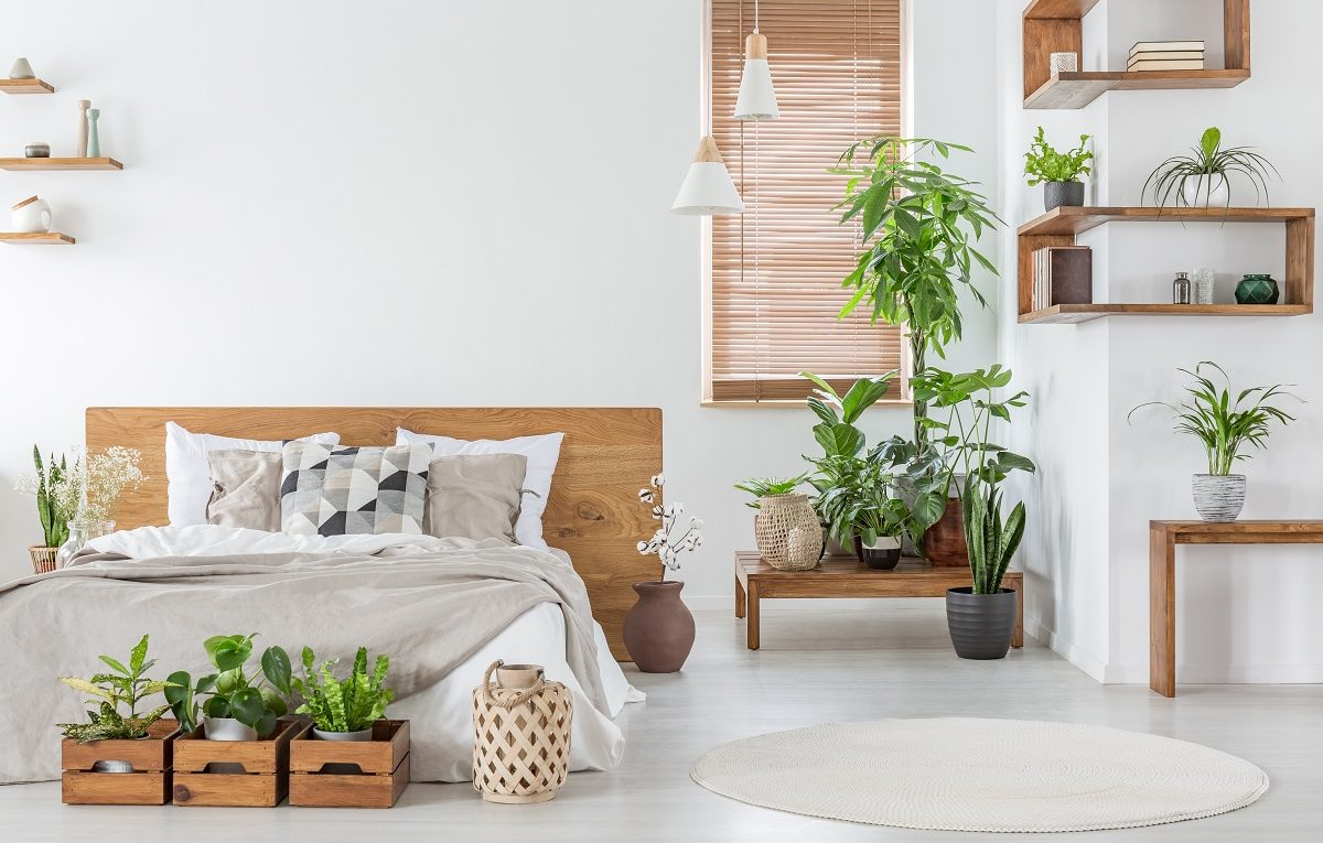 Indoor-Plants-May-Help-You-Sleep-Better-On-Your-Mattress-From-Orange-County